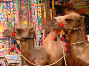 Camels survey The Silk Road site at the 2002 Smithsonian Folklife Festival held on the National Mall. (Harold Dorwin/Smithsonian)