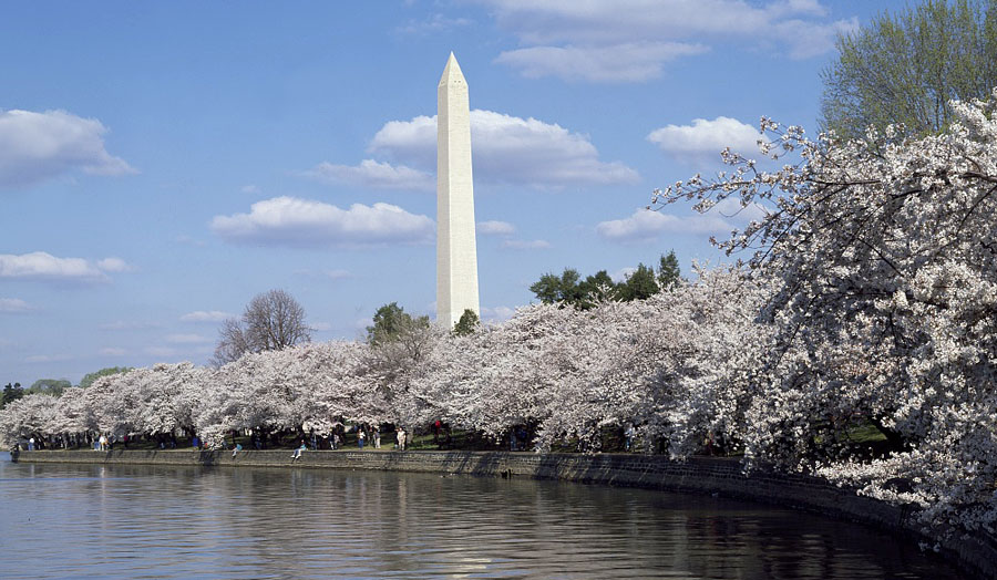 Washington Monument, seen from the Potomac Tidal Basin at Spring cherry blossom time, Washington, D.C. (Courtesy Carol M. Highsmith Archive, Library of Congress)